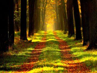 Wald lichtdurchflutet