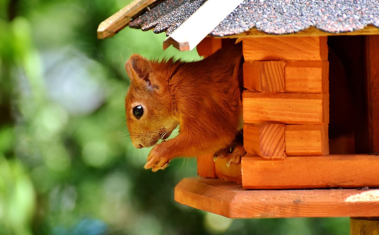 Eichhörnchen futtern am liebsten Nüsse, Kastanien, Bucheckern und Sonnenblumenkerne.