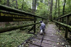 Kaskadenschlucht in der Rhön