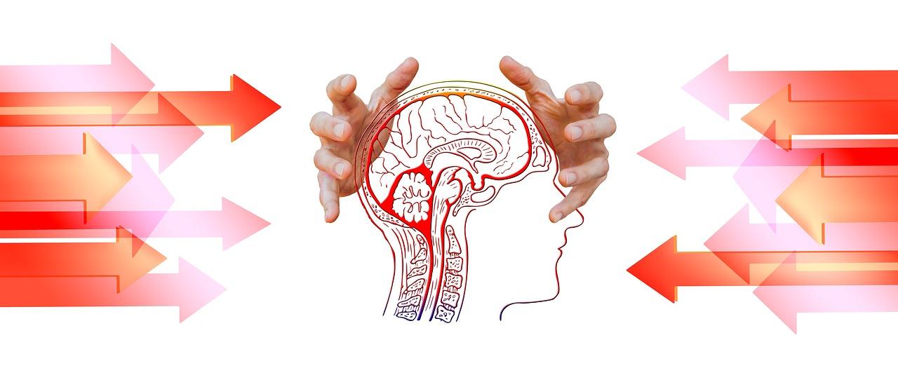 Zeichnung eines Kopfes inklusive Gehirn