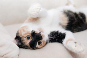 Niedliche Katzen brauchen Pflege: Bürsten hilft, überschüssige Katzenhaare beseitigen