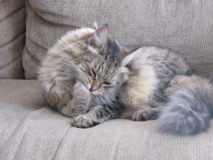 Katze auf Sofa: Katzenhaare inklusive