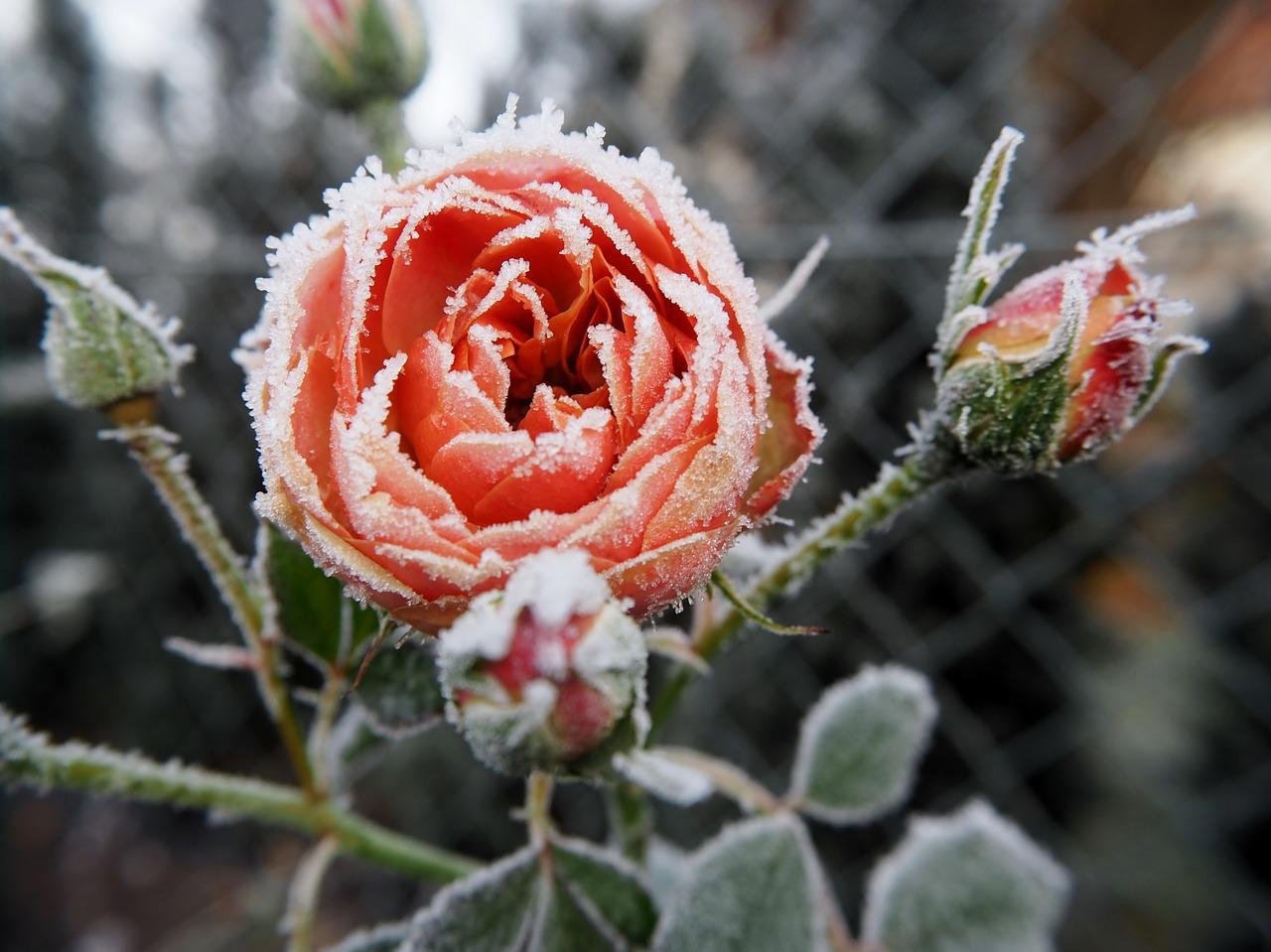Winterschutz im Garten
