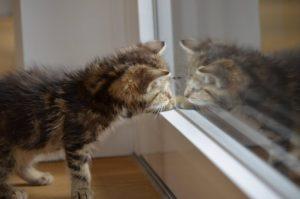 Katze drinbehalten