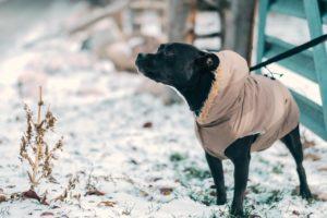 Angeleinter Hund an Silvester