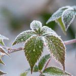 Gartenarbeit im Winter