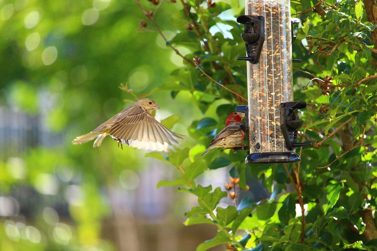 Vogel, Fütterung