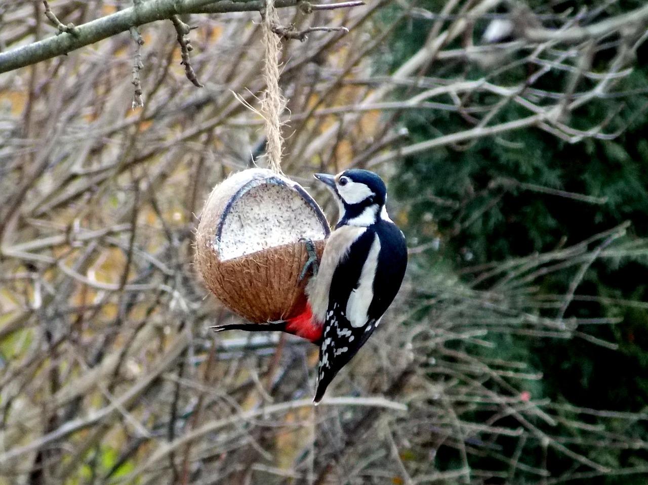 Vogel, Futterstelle