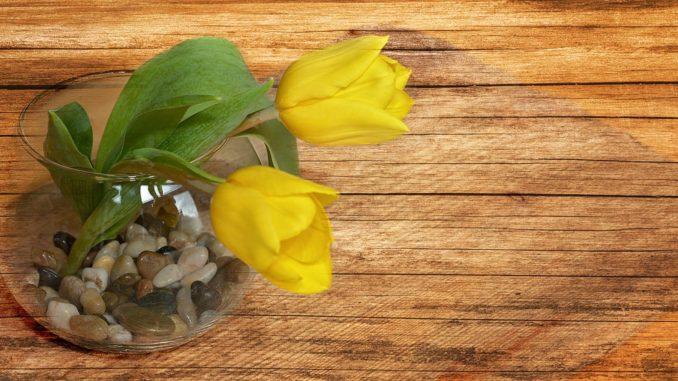 so bleiben tulpen auch in der vase lange frisch das. Black Bedroom Furniture Sets. Home Design Ideas