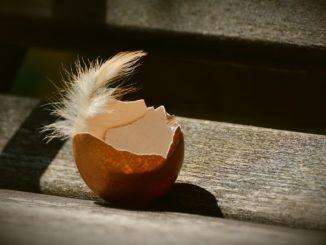 Osterdekoration aus Eierschalen