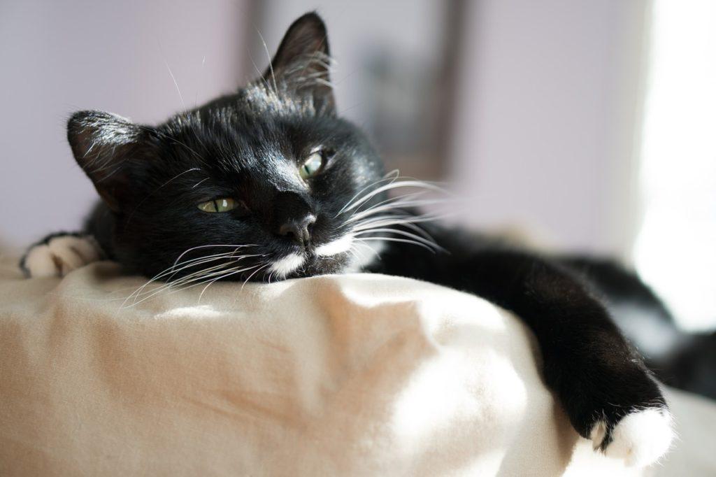 Zahnschmerzen und Forl sind bei Katzen nicht leicht zu erkennen.