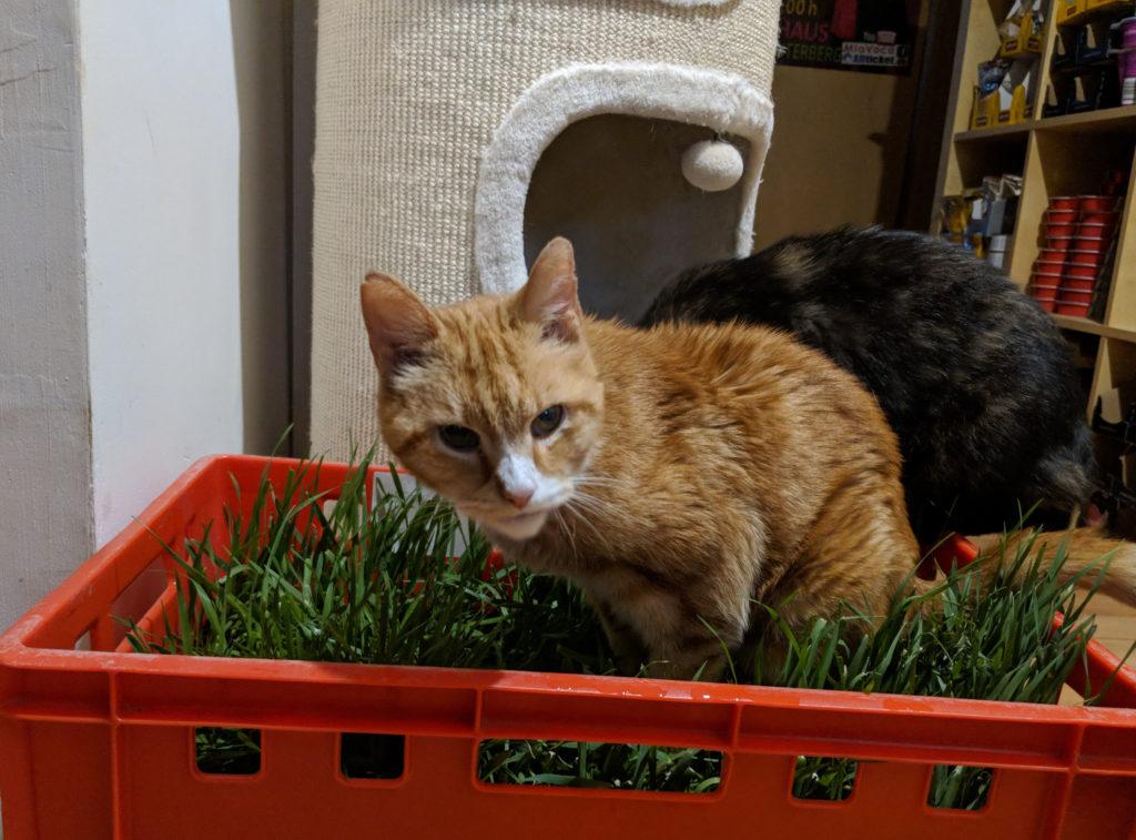 Katzen im Katzengras