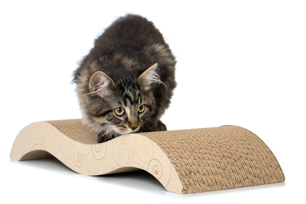 Katze mit Pappsofa