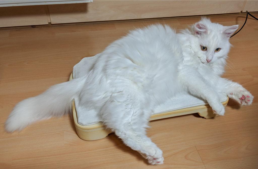 Last Minute Weihnachtsgeschenke Für Katzenfans Das Online Magazin