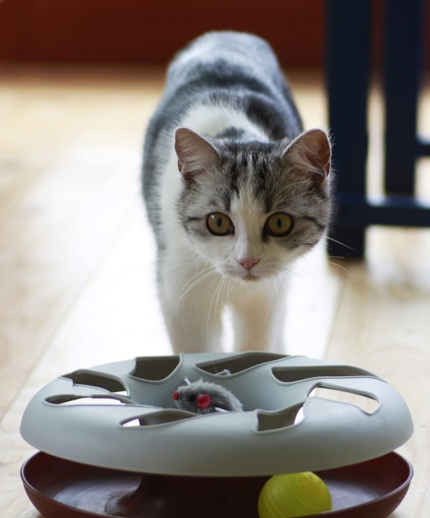 Weihnachtsgeschenk für Katzenfans: Spielzeug