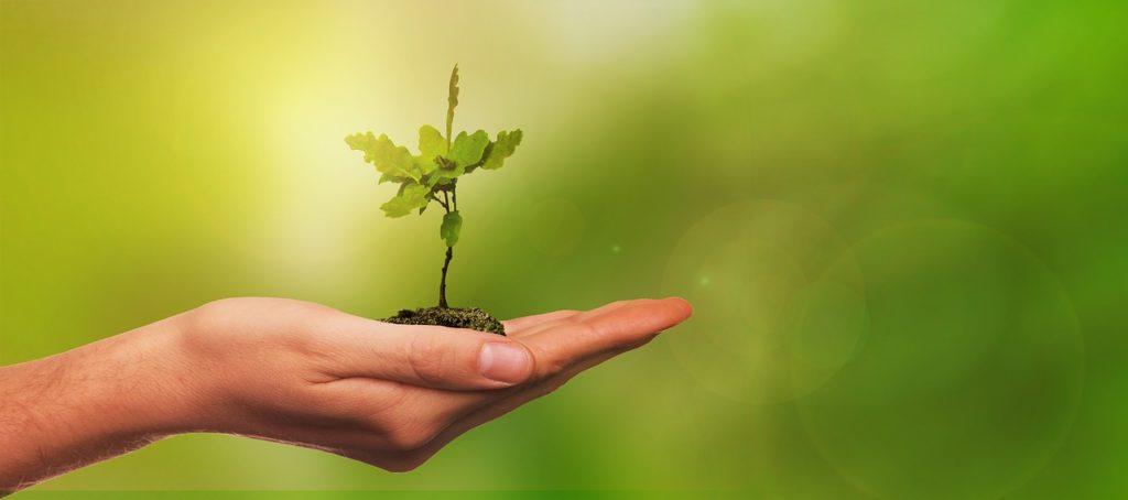 Hand mit Erde und winzigem Baum